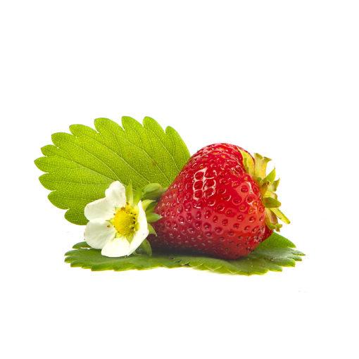 Amandine aardbei van aardbeienplant