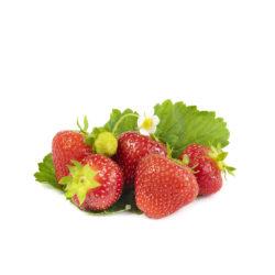 Sonata aardbeien van aardbeiplanten