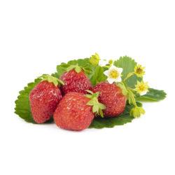 Korona aardbeien van aardbeiplanten