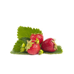 Daroyal aardbeien van aardbeiplanten
