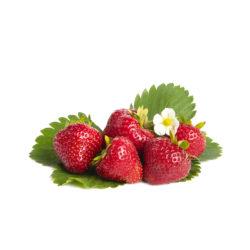 Darselect aardbeien van aardbeiplanten