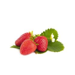 Furore aardbeien van aardbeiplanten