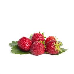 Senga Sengana aardbeien van aardbeienplanten