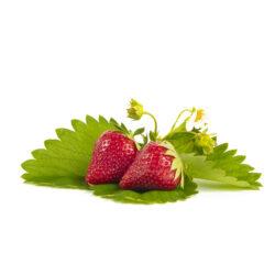 Malwina aardbeien van aardbeiplanten
