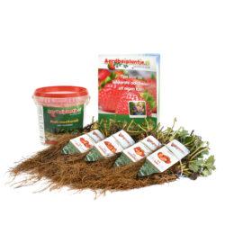 smulpakket aardbeiplanten 40 of 80 stuks met 1 kilo meststof en informatieboekje van aardbeiplantje.nl