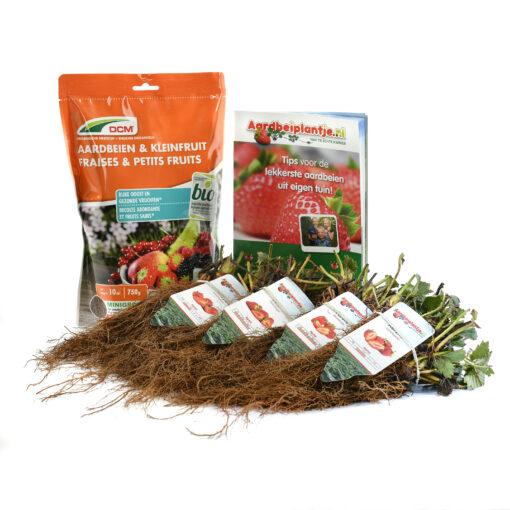smulpakket 20 stuks biologische aardbeiplanten met 750 gram organische meststof van aardbeiplantje.nl