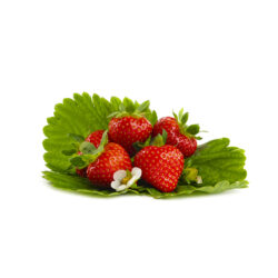 Dahli aardbeien van aardbeiplanten